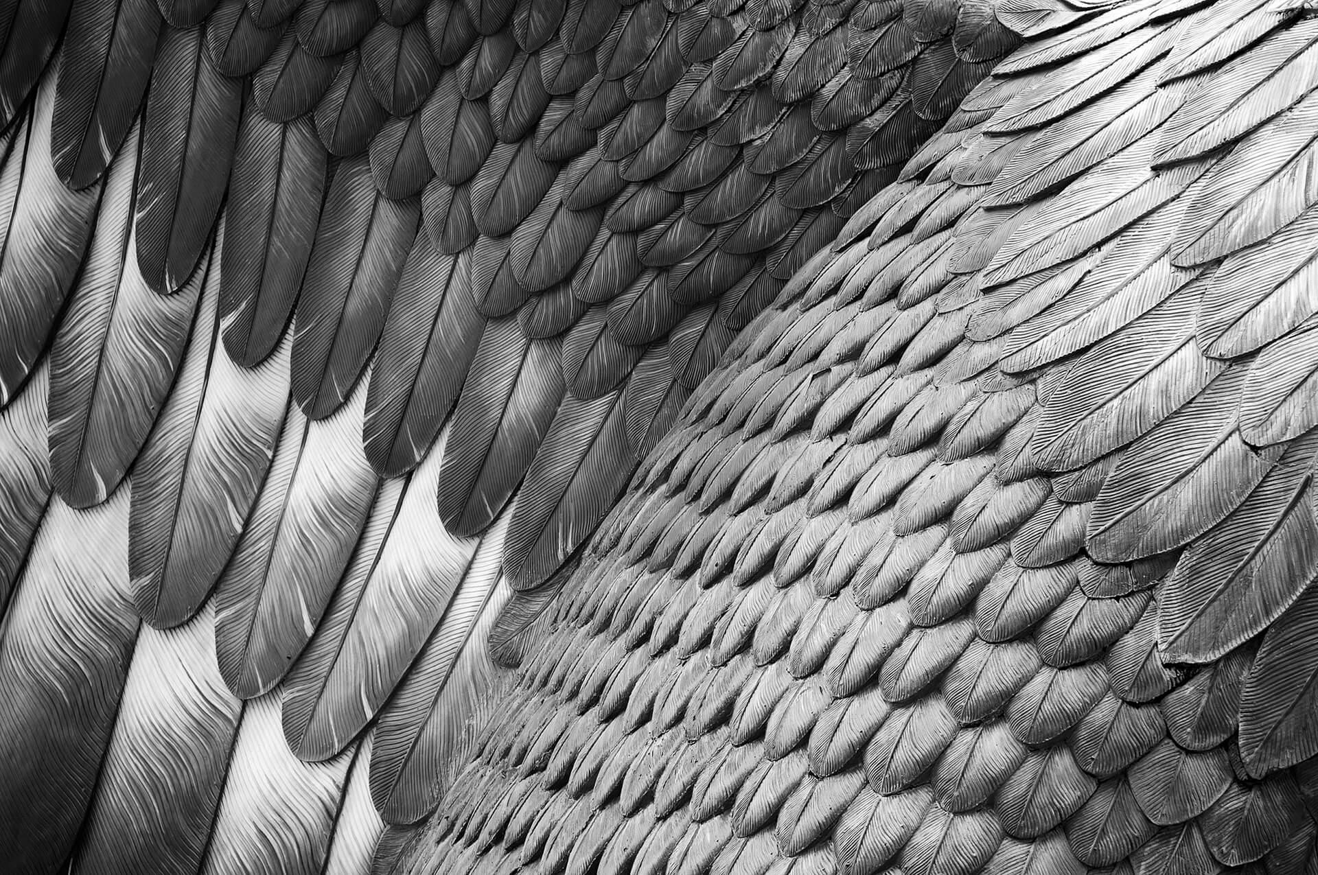 используя перья орла картинки цвет настенных часов