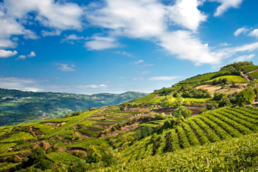 Esperti mondiali del patrimonio agricolo a Firenze: