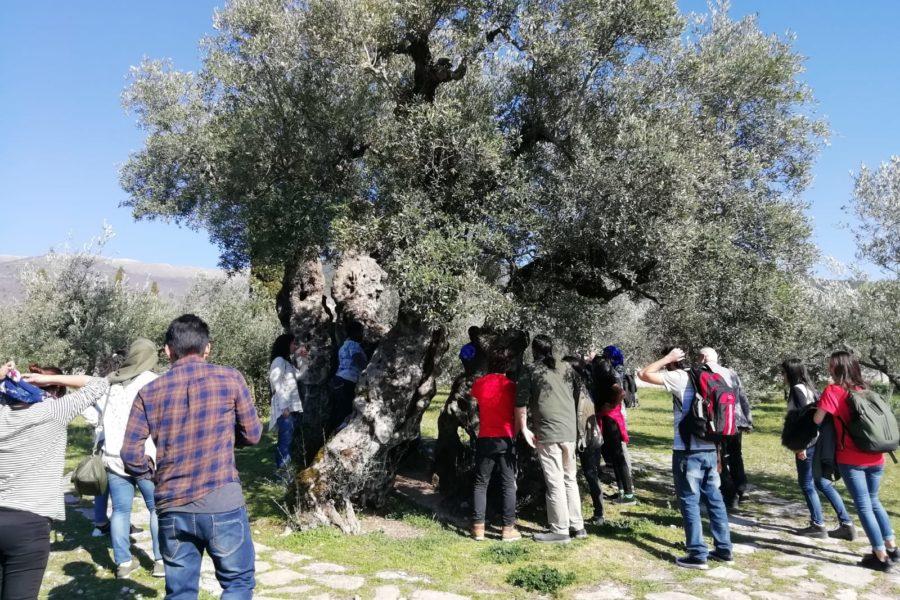 Visita alla Fascia Olivata di Assisi e Spoleto